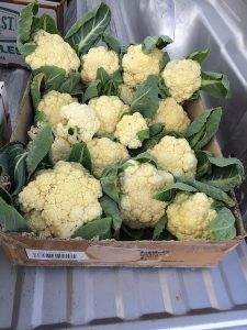 Harvested cauliflower